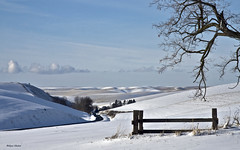 Can't fence it ALL in (walla2chick) Tags: road winter usa snow tree fence wa wallawalla waggonerrd absolutelystunningscapes