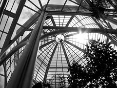 Inside greenhouse - Botanical Garden of Curitiba (Ondine B.) Tags: brazil paran brasil garden botanical metallic structure botnico curitiba greenhouse jardim jardimbotnico botanicalgarden estufa metallicstructure mywinners betterthangood