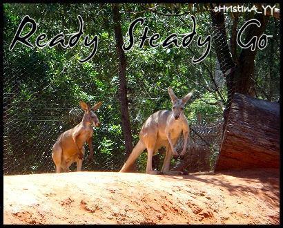 Kangaroo: Ready Steady Go