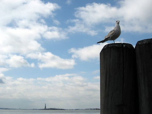 Seagull (and Statue of Liberty)