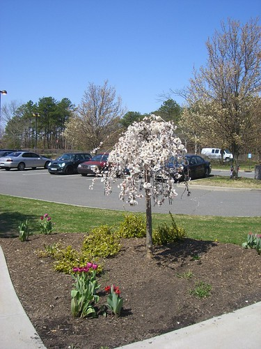 Brookhaven Plantings