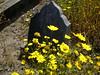 Ferndale grave