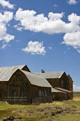 20090525_Bodie_092-barns (Carols Images) Tags: california easternsierras highway395 bodiestatehistoricpark