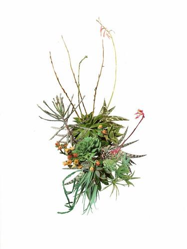 cactuscluster001