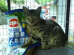 cat in Yuen long