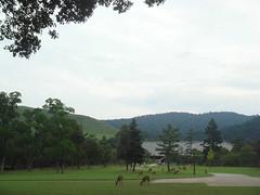 Nara Park (Namisan) Tags: