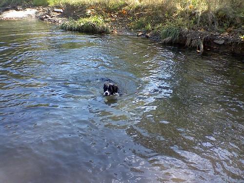Riley Swims
