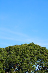 Trees and Sky (BibsReyes) Tags: sky mangotree tress imuscavite