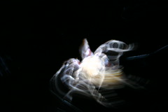 Dancing spider (Helen Boronia McHugh) Tags: pink brown white black blur hair spider dance movement whimsy rust long exposure dancing legs patterns web spin echo working spiderweb orb dancer move spinning blurr weaving orbweaver onblack