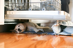 Puppy Nap Sous Dishwasher