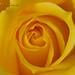 Por San Valentín.. una flor para las damas