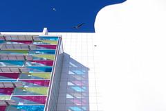 Macba Rainbow (juli_modul) Tags: barcelona colors architecture rainbow sony catalonia catalunya macba raval blueribbonwinner museudartcontemporanidebarcelona gavines dscr1 ltytr1 theperfectphotographer julimodul