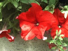 Jardines de Pichilemu