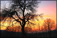 pure nature colours (Weirena(AWAY)) Tags: trees light red sky sun sunlight color colour