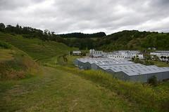 IMGP2532 (Jamie Goode) Tags: newzealand wine hawkesbay