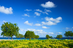 flowers on the beach (esther**) Tags: blue trees sea sky sunlight green beach yellow clouds landscape island spring sand greece rhodes flowersplants interestingness8