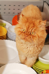 Garfi-In the Kitchen (E.L.A) Tags: family orange pet pets house cute home nature kitchen animal vertical cat fur photography persian eyes kitten feline funny looking dish interior ab kittens indoor nopeople attitude domestic curious mischief domesticanimals garfield curiosity domesticlife domesticcat garfi oneanimal colorimage homeinterior animalthemes animalbehavior insideof bestcatphotos differentcatbreeds