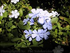 Flowers from the Farm (phil_sidenstricker) Tags: flower nature floral beautiful botanical naturallight donotcopy valleyofthesunphoenixmetro upcoming:event=981998 southmountainfarmphoenixazusa