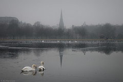 Off to church (Anthony P26) Tags: animalsbirdsinsects birds category england kensingtongardens landscape london places travel wildlife swans church weather fog foggy sky greysky churchspire spire pair couple swim float reflections reflectedlight water icywater ice roundpond pond trees park royalparks citypark capitalcity city citylife uk unitedkingdom english british greatbritain canon1585mm canon70d canon cityscape travelphotography