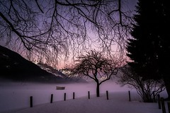Silently Lost in Dawn (bandit4czm) Tags: dawn sonnenuntergang abend abendstimmung abendimpression horizont winter baum zweige morgenrot abendrot tirol ausserfern obereslechtal lechtaleralpen lechtal