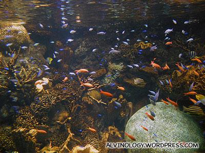 More coral reef fish