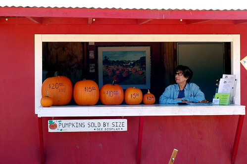 pumpkins sold by size