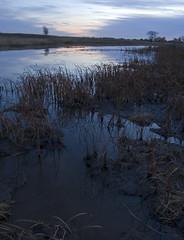 (baldwinm16) Tags: autumn sunset fall nature water reflections illinois dusk prairie springbrook springbrookprairie crookedslough illinoisforestpreserve