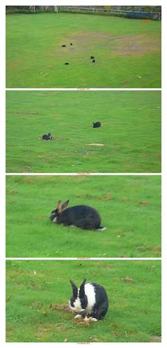 ok兔.jpg