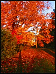 Mother Nature (Lara-queen) Tags: morning sun canada fall nature sunrise automne canon ilovenature soleil sweet montreal naturallight explore breathtaking matin naturesfinest blueribbonwinner encarnado splendiferous supershot amazingtalent outstandingshots flickrsbest goldenmix golddragon abigfave shieldofexcellence platinumphoto anawesomeshot colorphotoaward impressedbeauty flickrbest ultimateshot irresitiblebeauty superbmasterpiece onlyyourbestshot diamondclassphotographer flickrdiamond flickrdiamon amazingamateur flickrelite macromix colourartaward platinumheartaward platinumheartawards superamazingshot wonderfulworlmix happinessconservancy goldstaraward quynhvu natureselegantshots allmemorieswelcome couleursautomnales platinumhearthalloffame touraroundtheworld canonpowershotsx10is laraqueen
