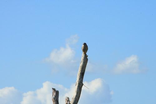 Everglades National Park 12-1-07 110