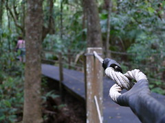 Chain (phempsall) Tags: sea rainforest australia boardwalk acres portmacquarie seaacres