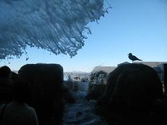 Inside the Waterfall (joelaz) Tags: aquarium monterey acquarium