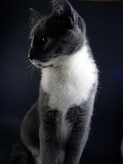 Whisper dark & light (imthinkingoutloud) Tags: cat dark kitten feline whisper mysterious simple naturesfinest playwithlight abigfave blueribbonphotography diamondclassphotographer flickrdiamond friendlychallenges colorwithoutcolor imthinkingoutloud