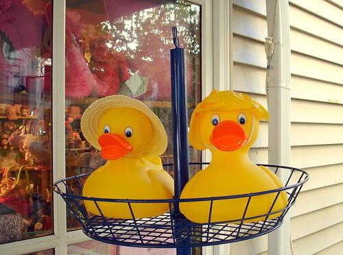 Baby Ducks ... Rain or Shine