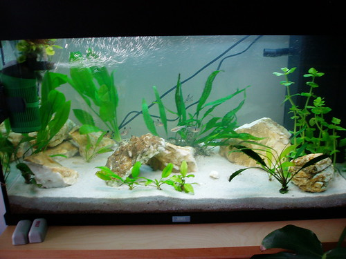 Some beginner fish tank questions for Beginner fish tank