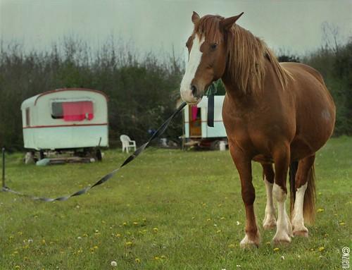 chevaux26