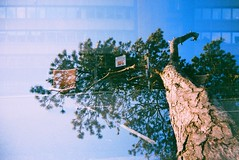 Lucky Doubles 24 (Trapac) Tags: street uk blue england tree film pine bristol scotland spring chair doubleexposure glasgow plasticfantastic bark lucky trunk expired vivitar plasticcamera thedowns 100iso wmh flickrwalk bathstreet durdhamdown westburyontrym randomchair vivitarultrawideslim vivitarultrawideandslim thesevensisters parkingspacereserved vivitarroll12 vivitarroll13 vivitarws luckysuper withslithytoves roll1213