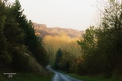 Automne en Picardie ( photopade (Nikonist)) Tags: picardie somme automne arbres couleurs végétation nature nikon nikond70 affinityphoto imac apple