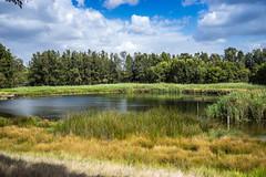Wenthworth Common (Manny Esguerra) Tags: running outdoors park landscapes sydney