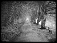Walking towards the light (Geir Bakken) Tags: bw blackandwhite mist trees park path man m43 mirrorless microfourthirds yabbadabbadoo beautiful bestpicture perfectbeauty norway norge vestfold horten