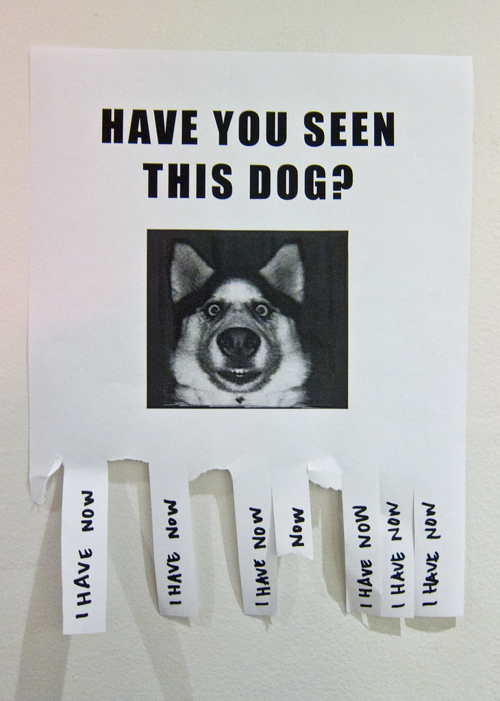 Have You Got Blue Eyes Learn What Make Up Will Make Them: Have You Seen This Dog?