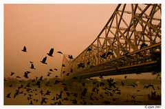 ~The Frequent Flyers~ (A y A n) Tags: morning bridge india water canon river rebel dawn pigeon holy hindu kolkata calcutta ganga ganges ayan ghat howrah 400d khasnabis httpayancoin
