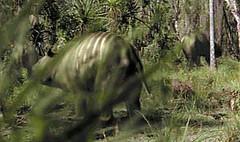 Diprotodons having brunch