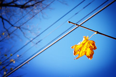 intersection (jasfitz) Tags: blue autumn sky orange tree fall silhouette yellow leaf branch branches wires solo single procrastination lonely vignette hopeful