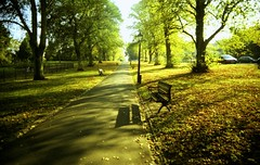 Autumn in Suburbia (2). (Trapac) Tags: uk autumn trees light shadow england green film bench bristol xpro crossprocessed fuji slidefilm plasticfantastic velvia vivi footpath vivitar lightshadow plasticcamera 50iso fujivelvia cothamgardens cotham loverswalk vivitarultrawideslim vivitarultrawideandslim vivitarws agreefee vivitarroll2 flickrcollectionongetty tracypackerphotography wwwtracypaackercom