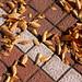 fallen leaves on the street