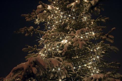 Winter Sparkles