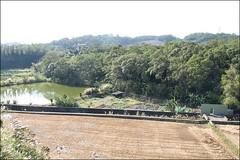 峨眉湖吊橋23