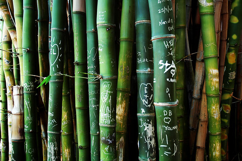 bamboo-graffiti