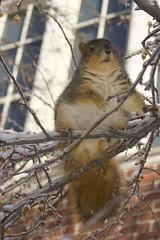 squirrel-blob